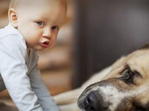 Собаки снижают вероятность возникновения астмы у детей