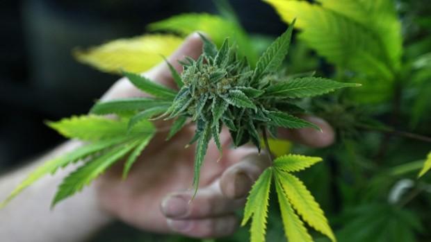 Употребление марихуаны в подростковом возрасте нарушает развитие мозга