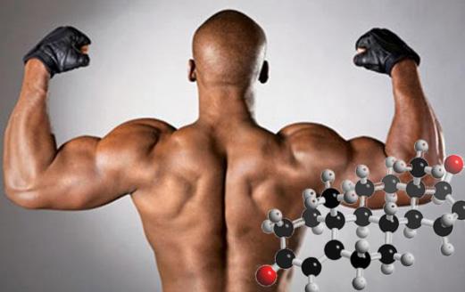Тестостерон позволит увеличить мышечную массу