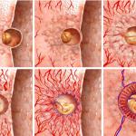 Роль плаценты