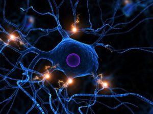 Дети, болеющие аутизмом, имеют уникальные нейроны в головном мозге