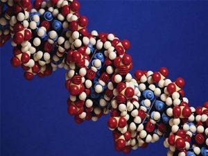Возраст рождения первого ребенка заложен в генах