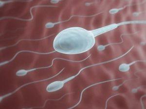 Ученые рассказали, как должны питаться мужчины, планирующие зачать ребенка