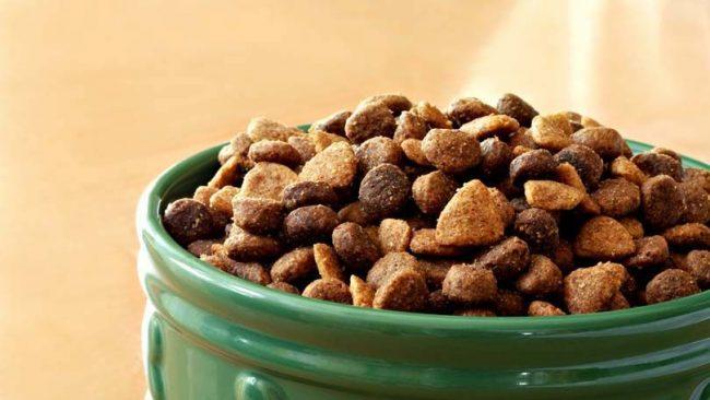 Питание для домашних питомцев: выбираем сухой корм