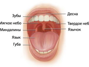 Гиперплазия миндалин