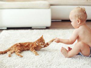Малыш и кошка: воспитание любовью