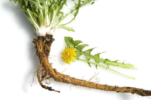 Аптечка в вашем огороде: что лечит одуванчик
