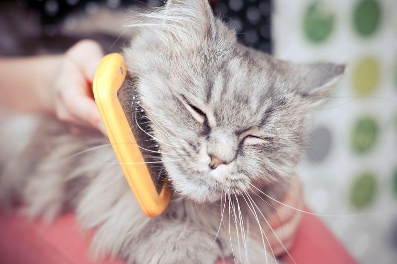 Причины чрезмерной линьки у кошек