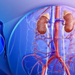 Аплазия почки – причины, виды и проявления патологии
