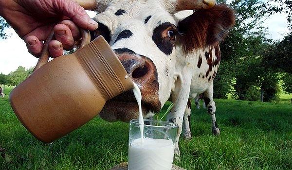 Дети, которые не пьют коровье молоко, в два раза чаще имеют низкий уровень витамина D