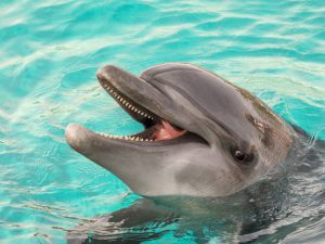 Дельфинотерапия: польза и особенности контактов дельфинов с детьми
