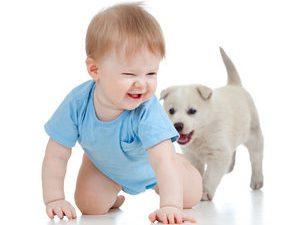 Что делать, если ребёнок боится собак?